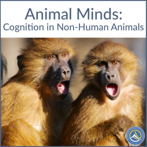 Animal Minds: Cognition in Non-Human Animals
