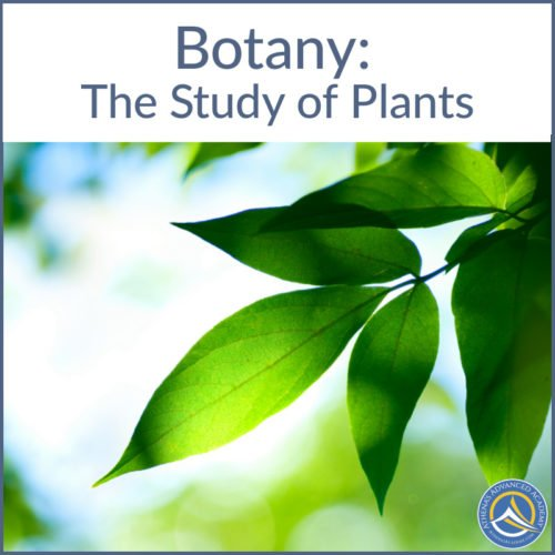 Botany: The Study of Plants