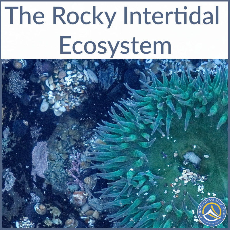 The Rocky Intertidal Ecosystem