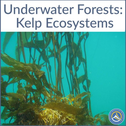 Underwater Forests Kelp Ecosystems
